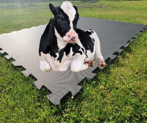 Cow Mats - Horse Stall Mats
